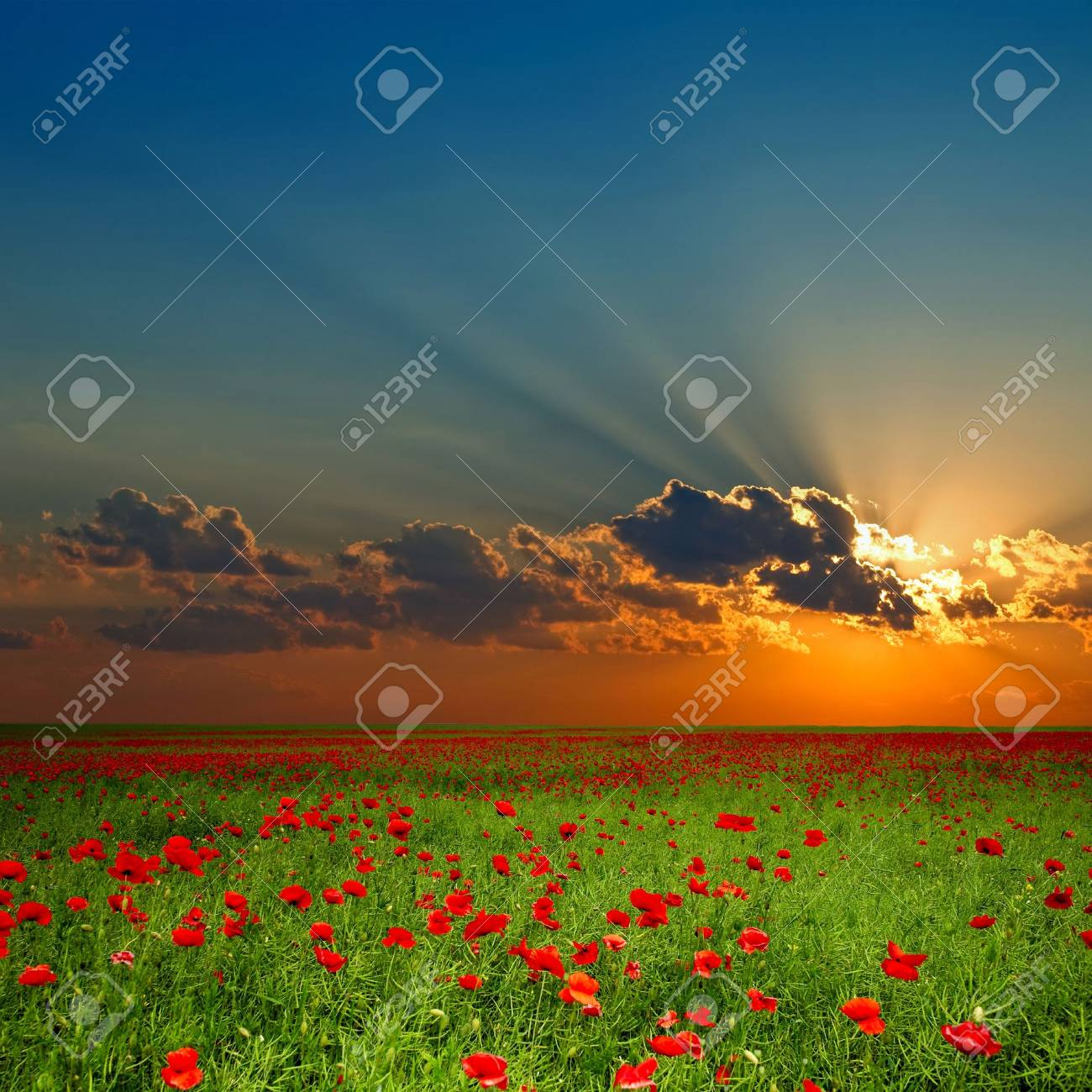 Green field with red poppies under cloud Stock Photo - 3437954