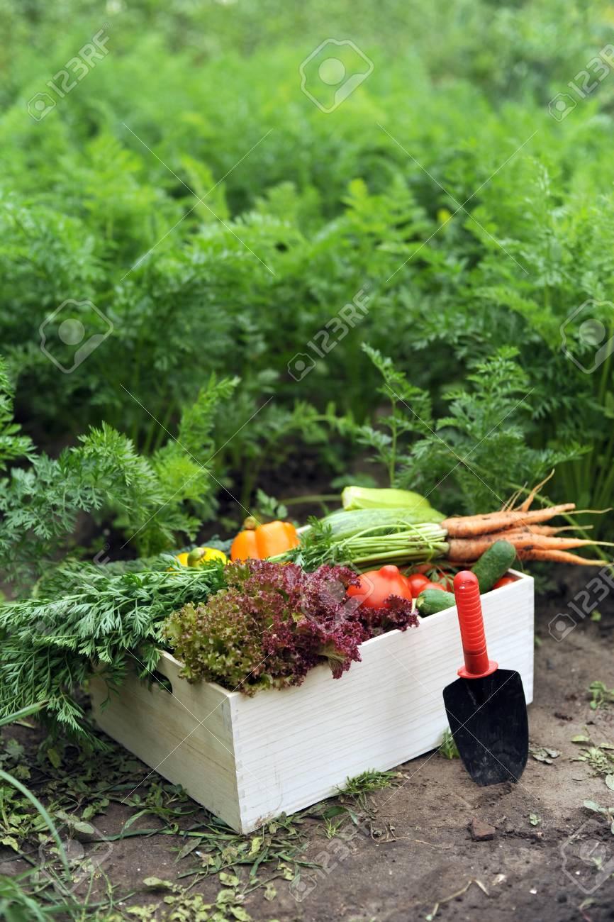 Planter Dans Une Caisse En Bois une image de légumes dans une caisse en bois