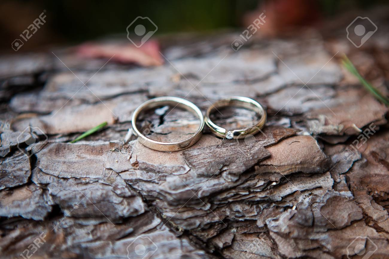 Couple Wedding Rings On Old Wood Texture The Bark Of The Tree Stock