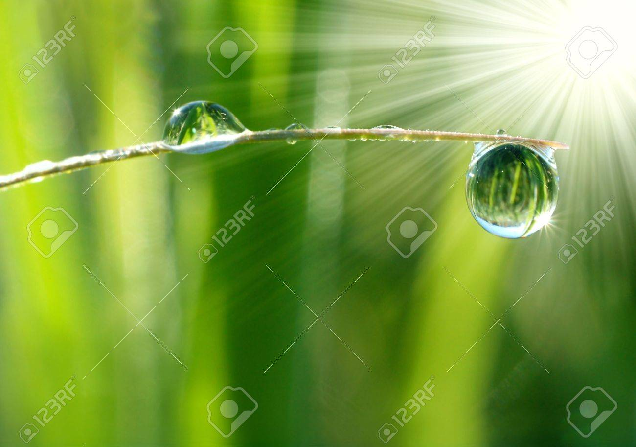 Fresh grass with dew drops close up Stock Photo - 6522567