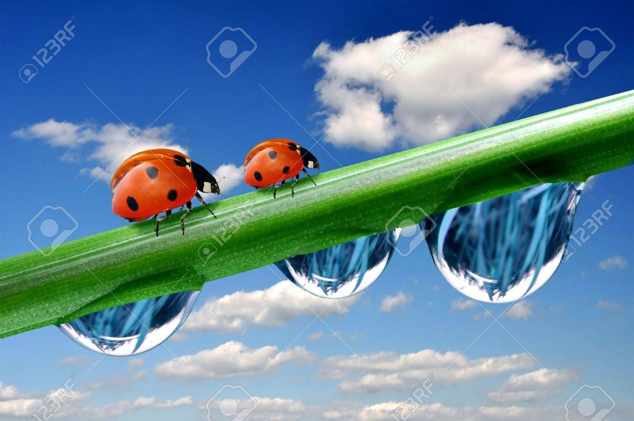 Fresh grass with dew drops and ladybird Stock Photo - 8808693