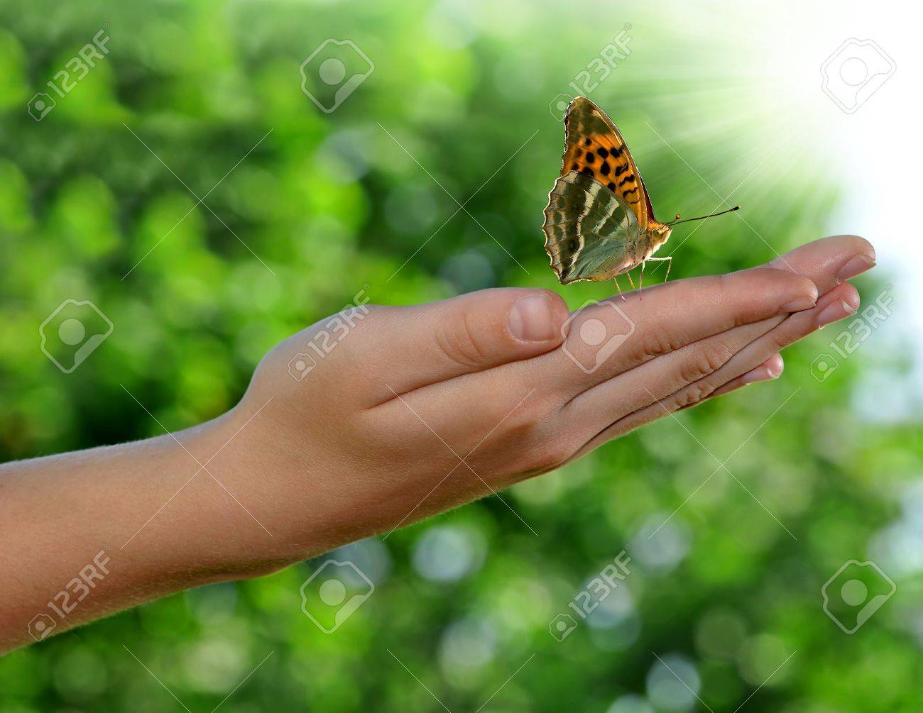 Worksheet Butterfly Beetle butterflies beetle insect stock photos images royalty free butterfly on childrens hands