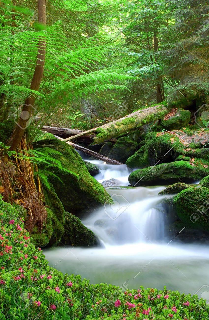 Waterfall in the national park Sumava-Czech Republic Stock Photo - 11498958