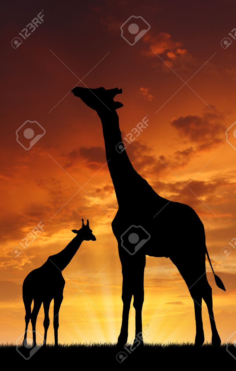 Two giraffes in sunset Stock Photo - 12417094