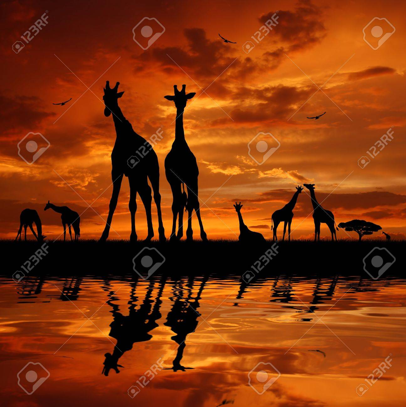 Two giraffes in sunset Stock Photo - 13007103