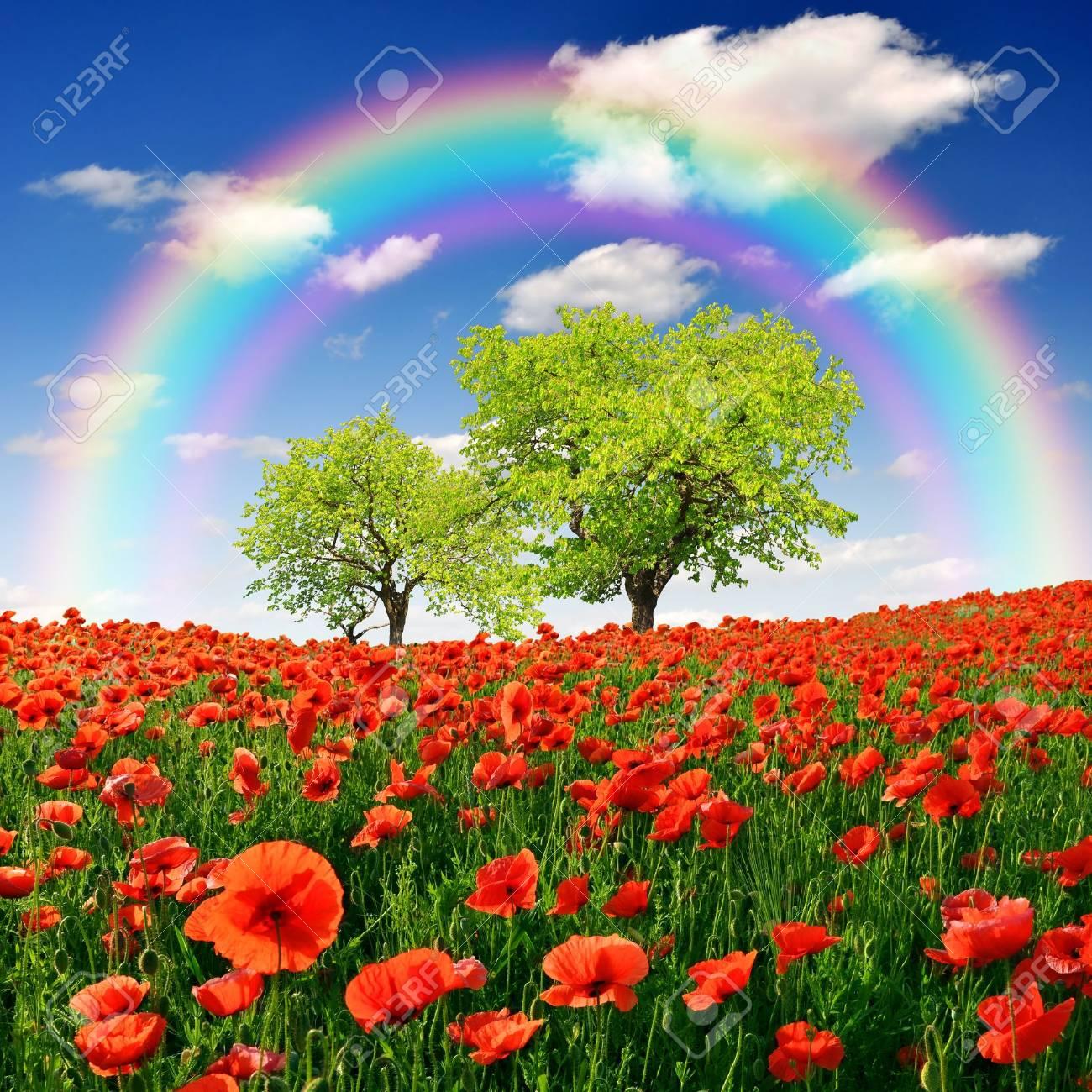 arco iris sobre el paisaje de primavera con la amapola roja
