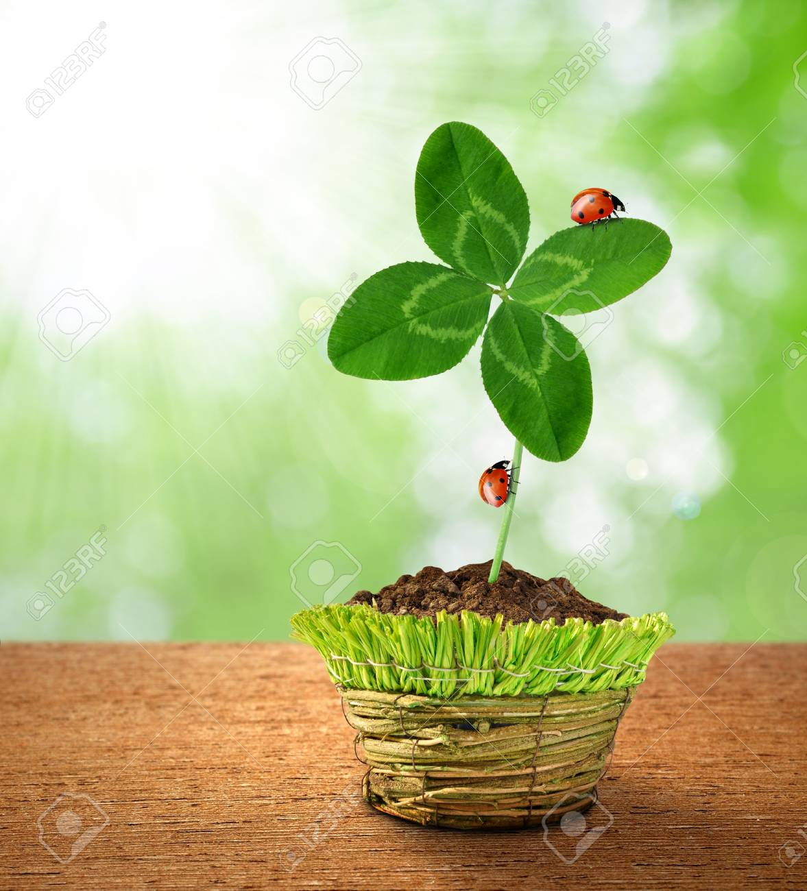 Clover in decorative pot on green background Stock Photo - 17316546