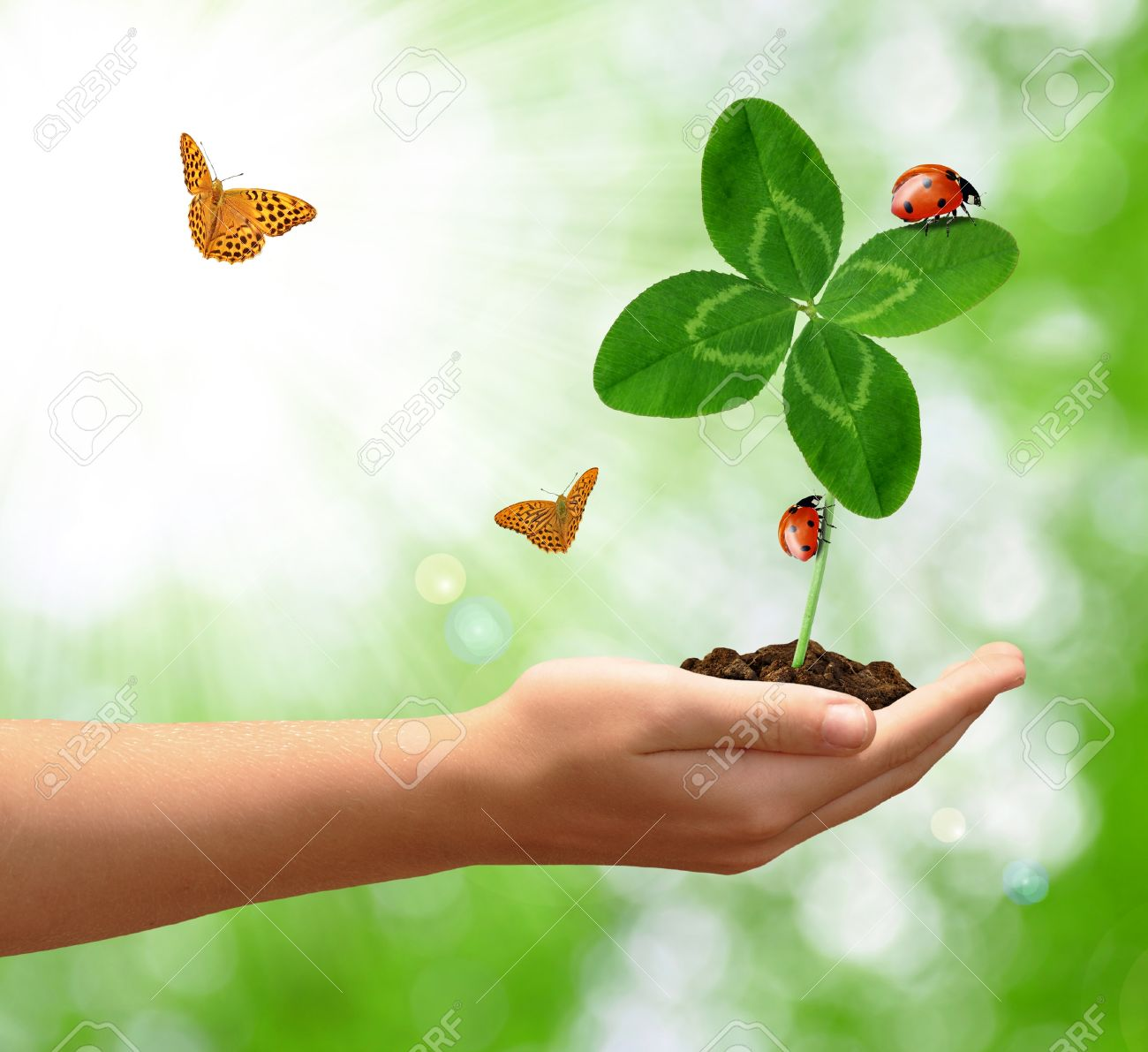 growing green clover with the ladybirds and butterfly - 17285451