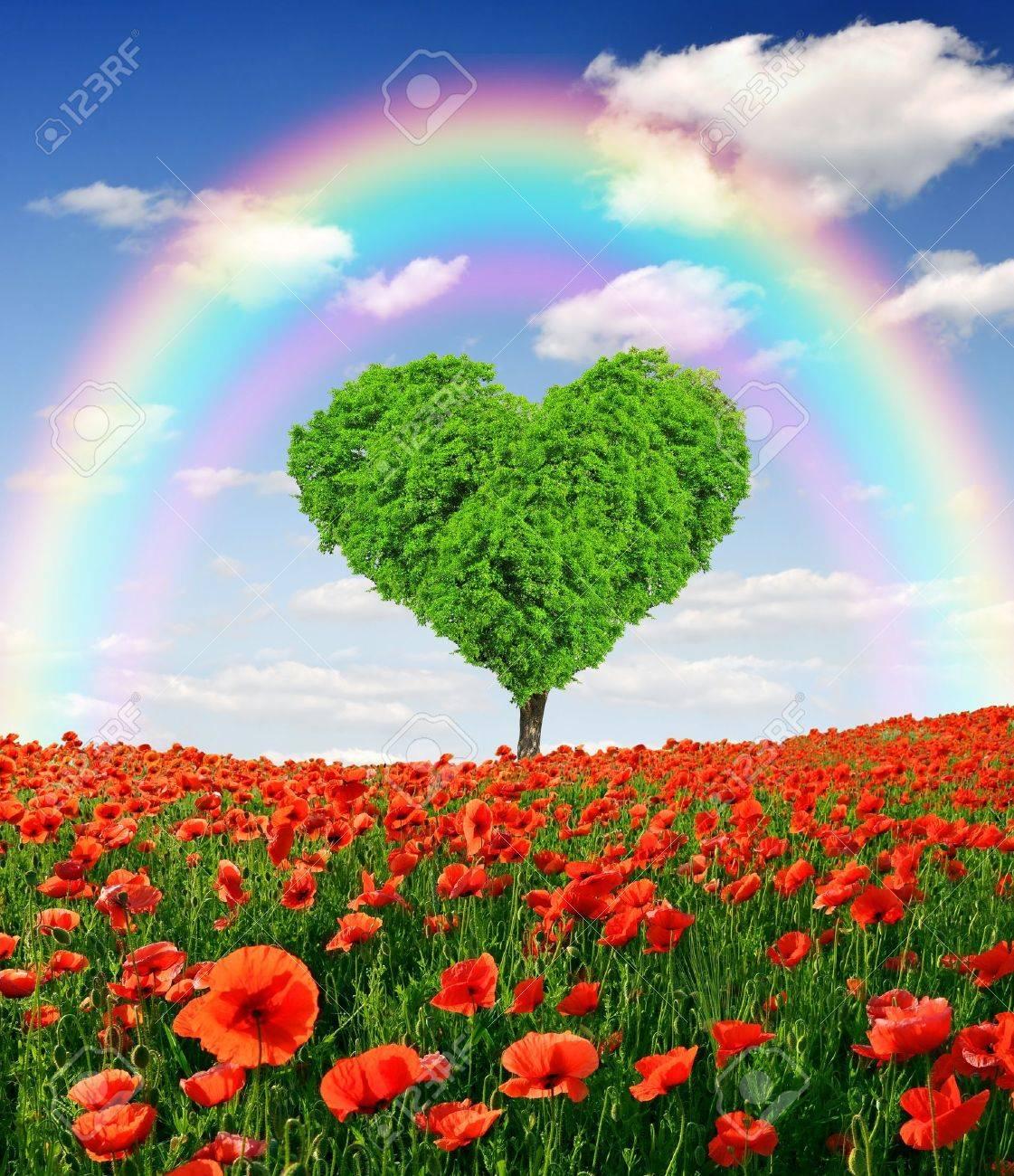 Arco Iris Sobre El árbol En La Forma Del Corazón Fotos Retratos