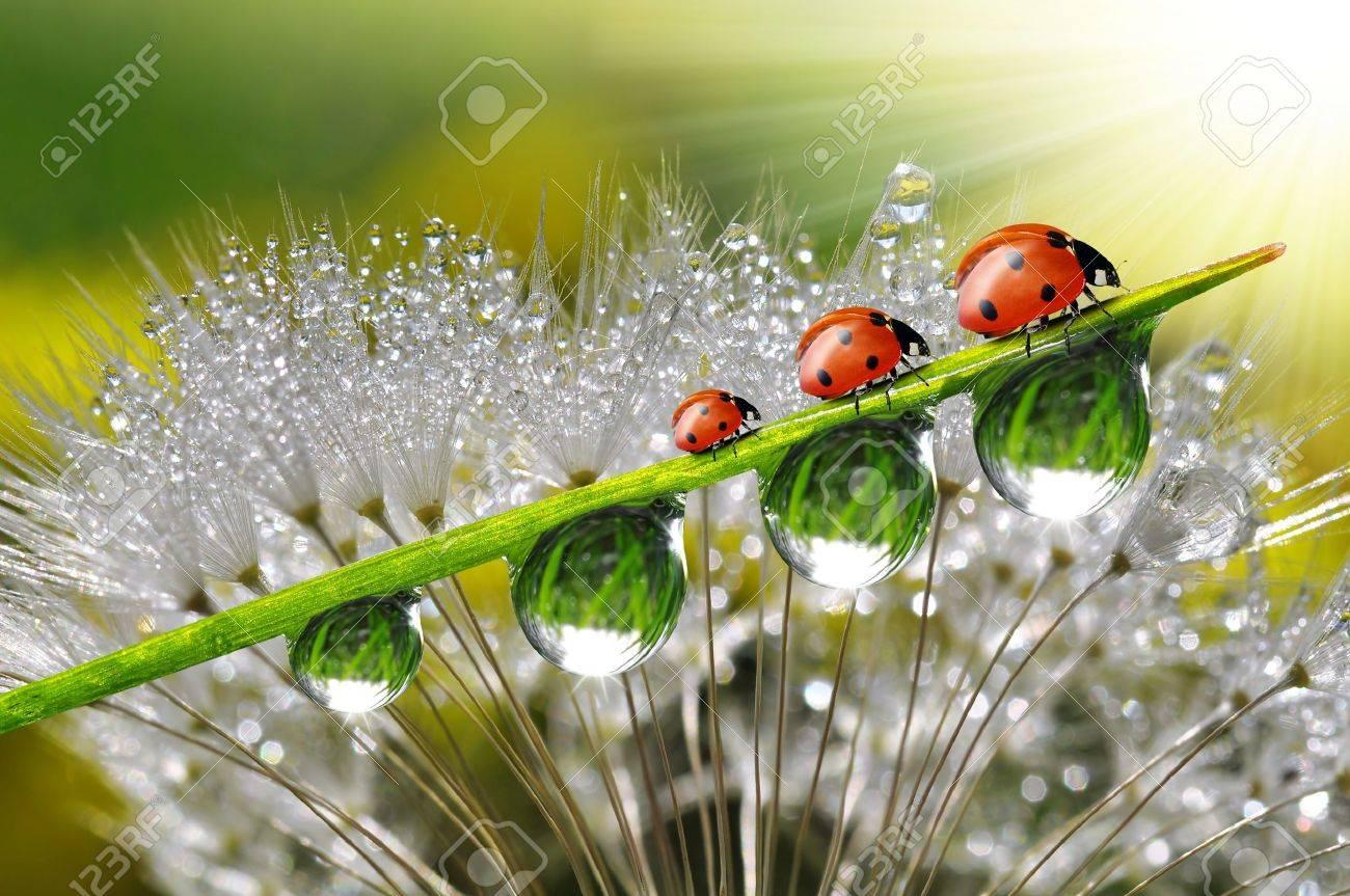 dew with ladybugs - 18653853