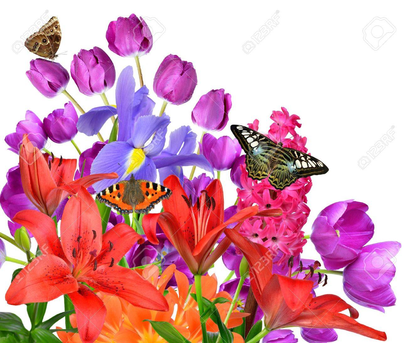 Spring Flowers With Butterflies Isolated On White Background Stock