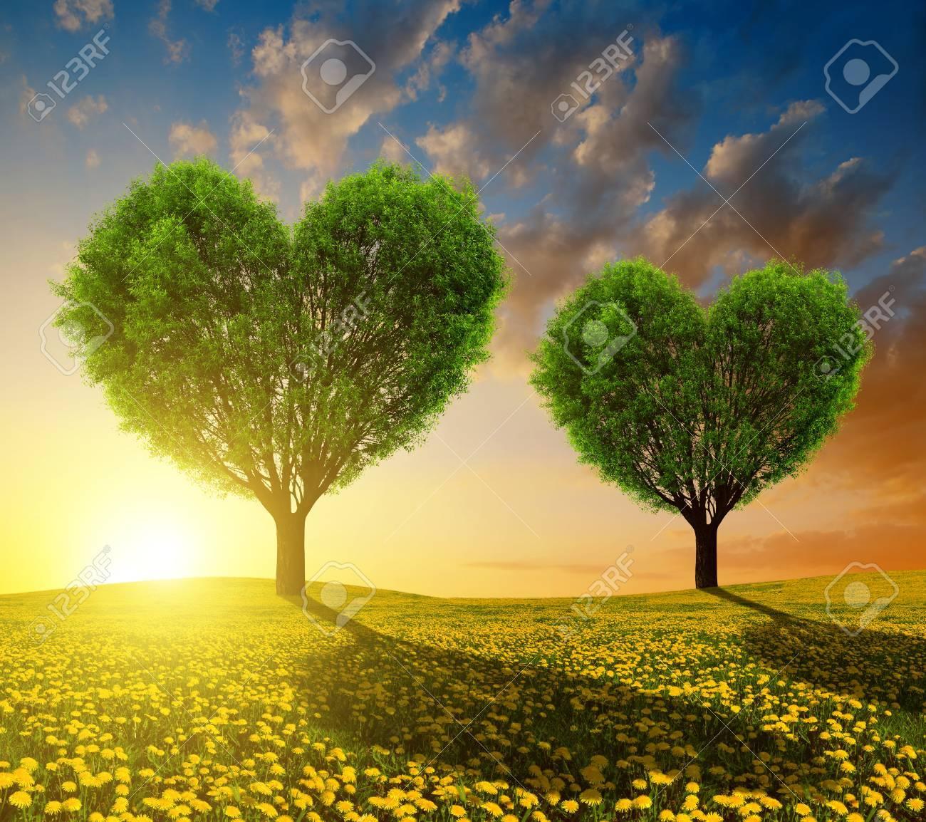 Diente De León Campos Con árboles En Forma De Corazón Al Atardecer