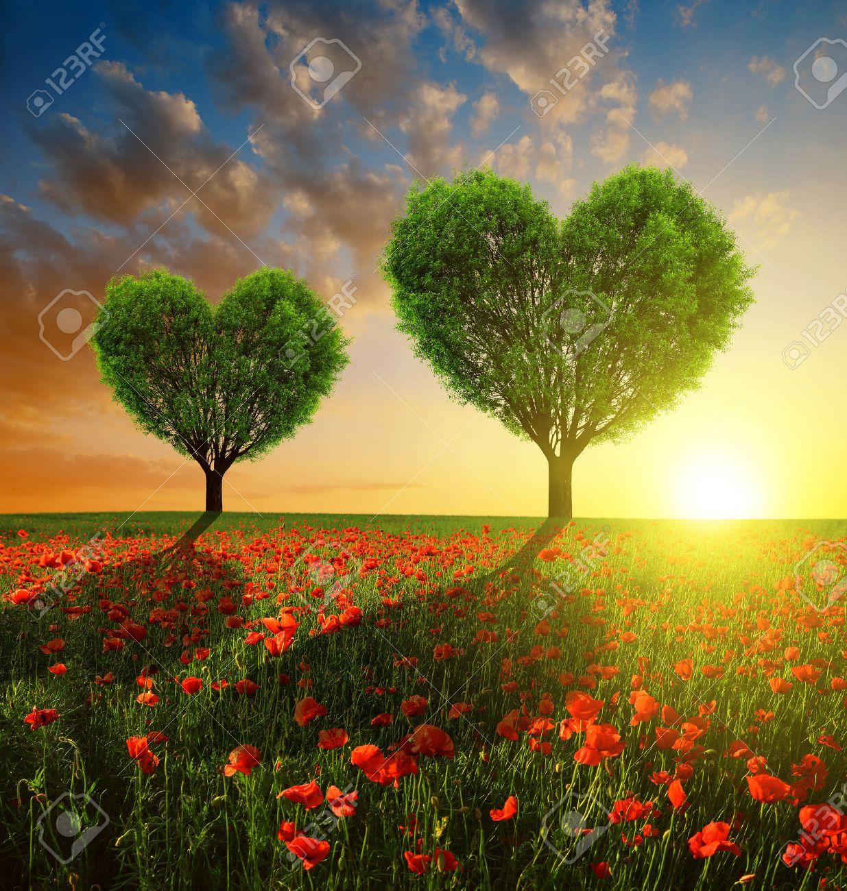 Campo De Amapolas Con árboles En Forma De Corazón Al Atardecer Día