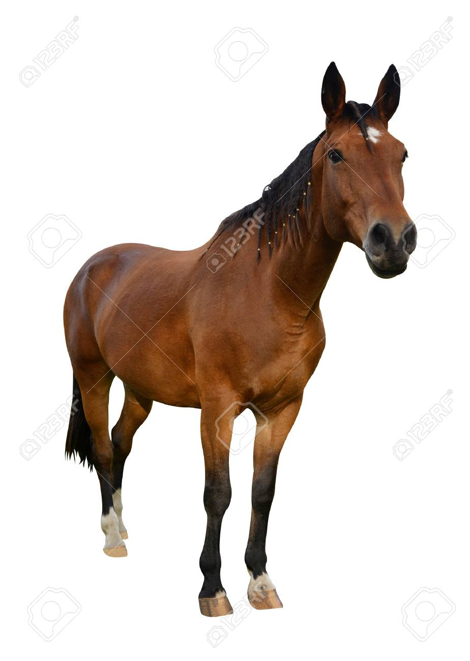 Horse isolated on a white background - 57344533