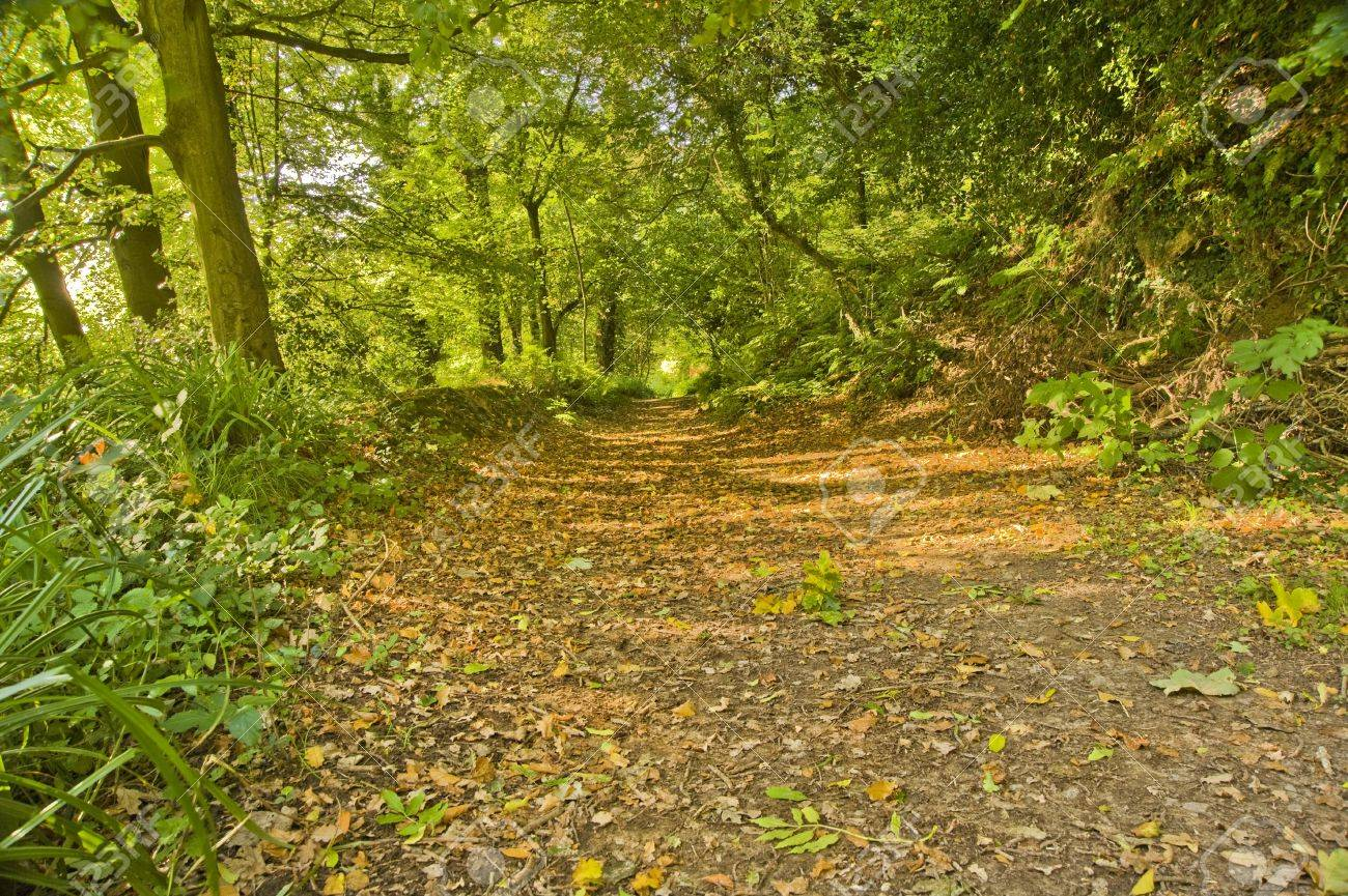 Beautiful Colorful Autumn Forest Scene With Path Through Trees ...