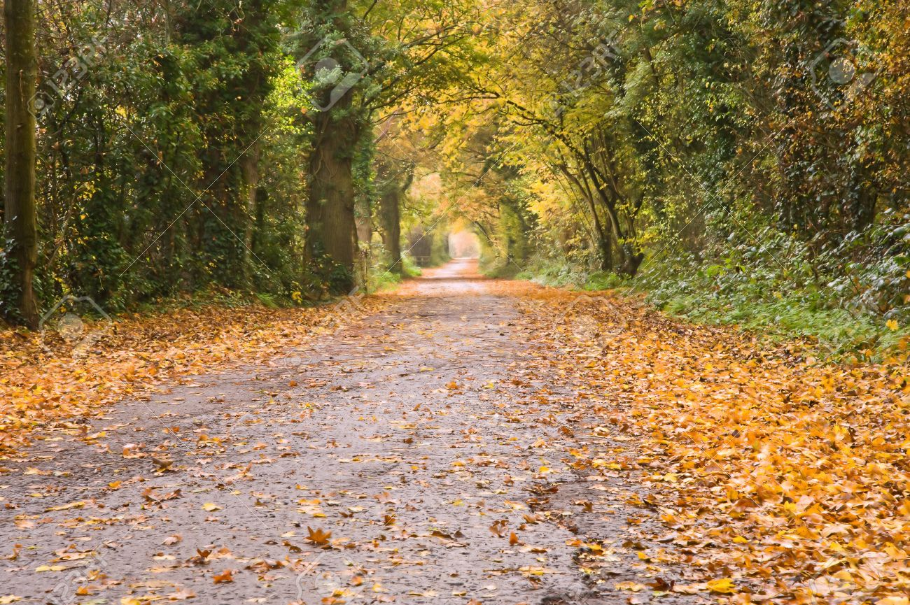 Beutiful beutiful long path through autumn fall vibrant forest scene