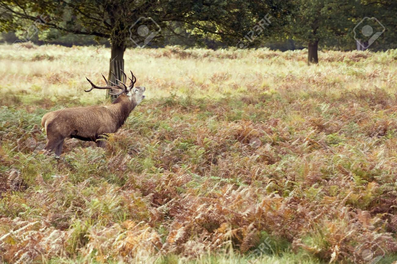 Magnificent red deer stag in sunbathed forest Stock Photo - 8530455
