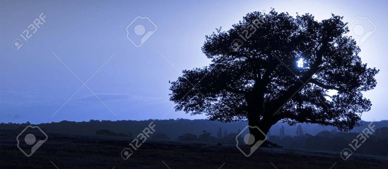 Silhouette of ancient English oak tree at sunrise in Autumn Fall Stock Photo - 8530508