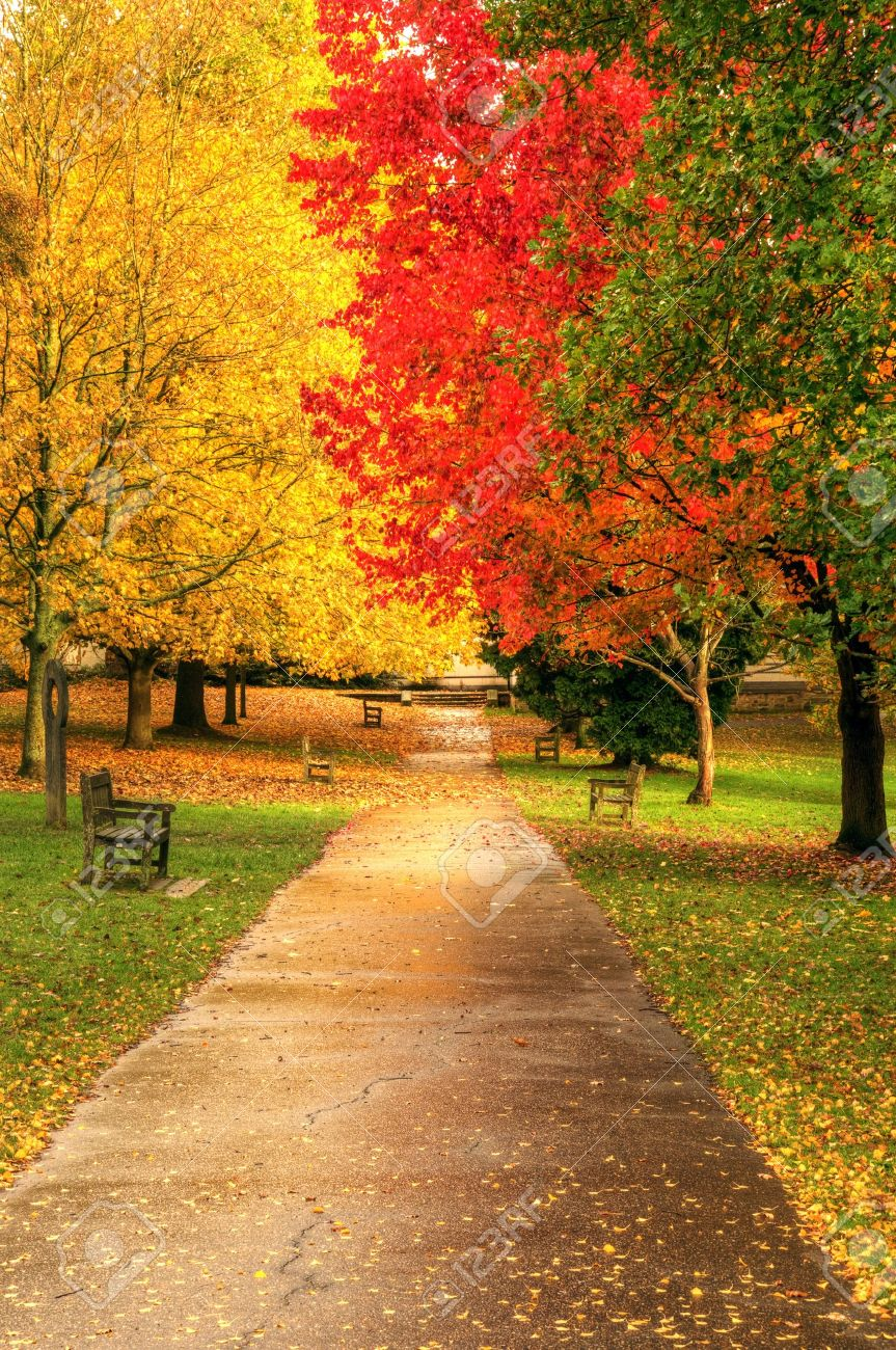 Beautiful autumn fall forest scene with vibrant colors and excellent detail Stock Photo - 8560655