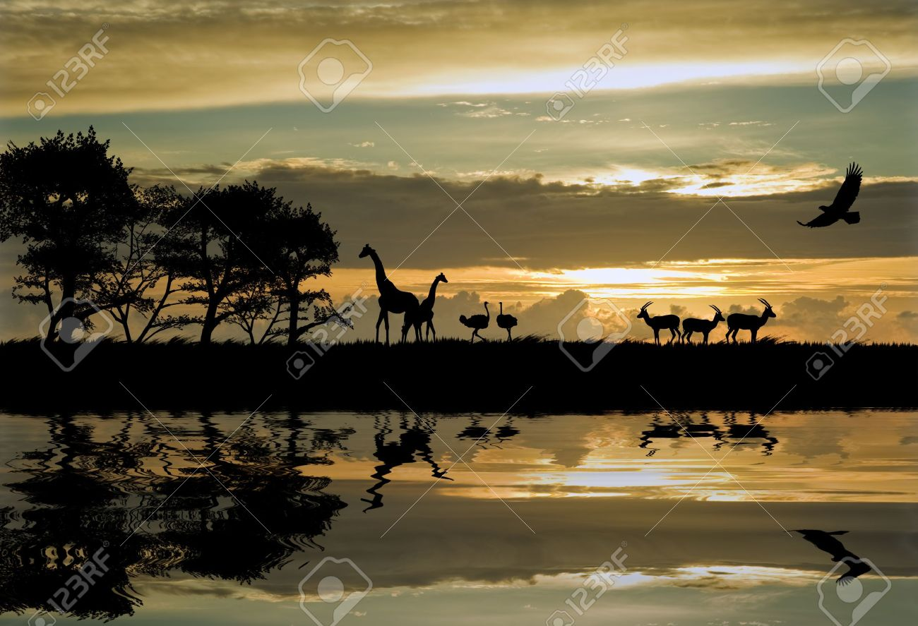 Silhouette of animals in Africa theme setting with beautiful colorful sunset - 8805264