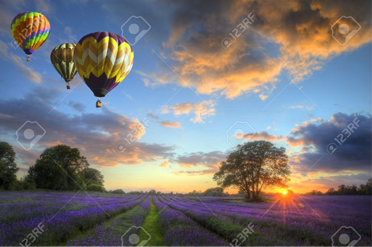 Beautiful image of stunning sunset with atmospheric clouds and sky over vibrant ripe lavender fields in English countryside landscape with hot air balloons flying high Stock Photo - 10791455