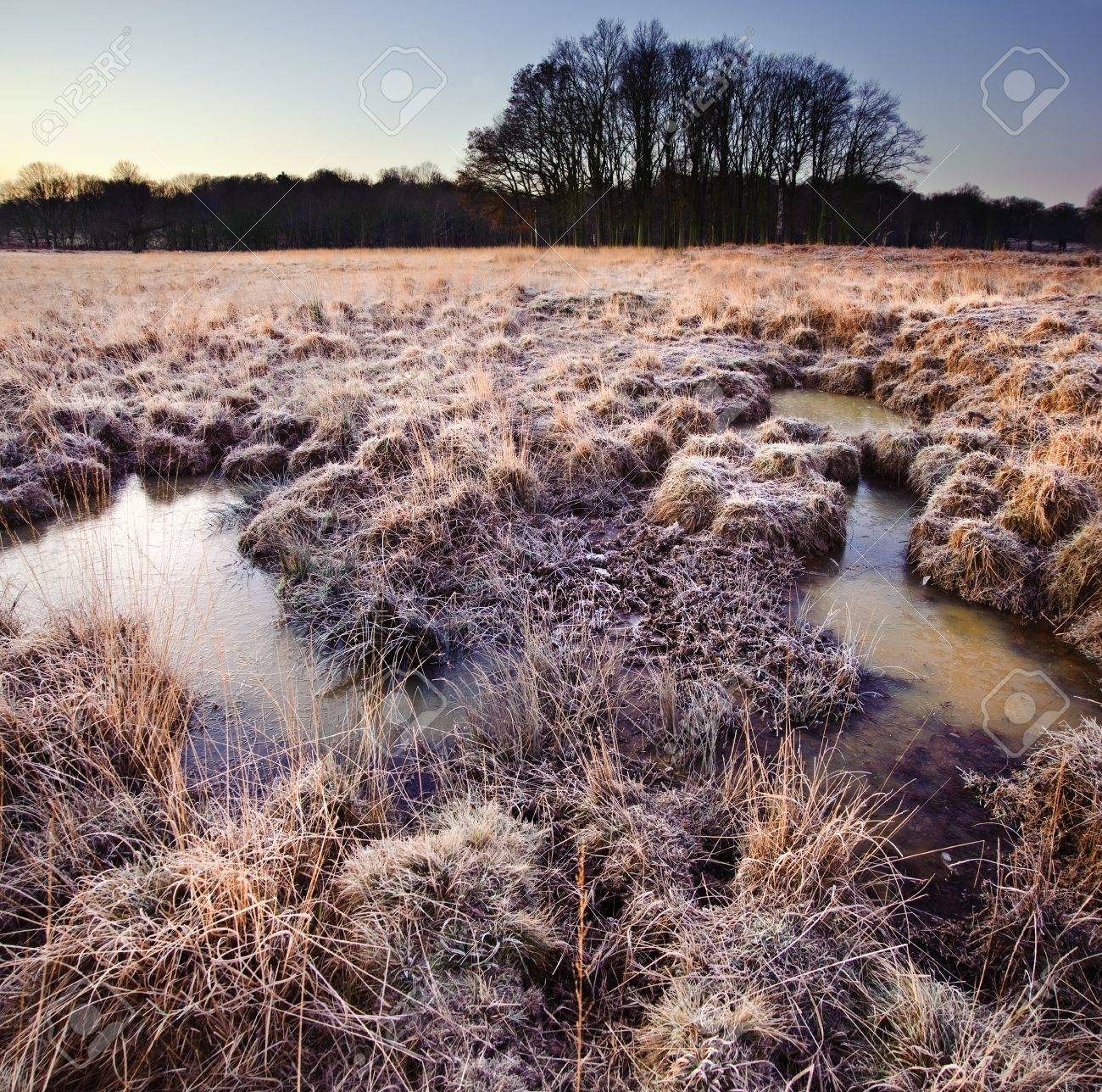 Winter landscape across fields with frostty grass and bog frozen over with trees on horizon Stock Photo - 12324142
