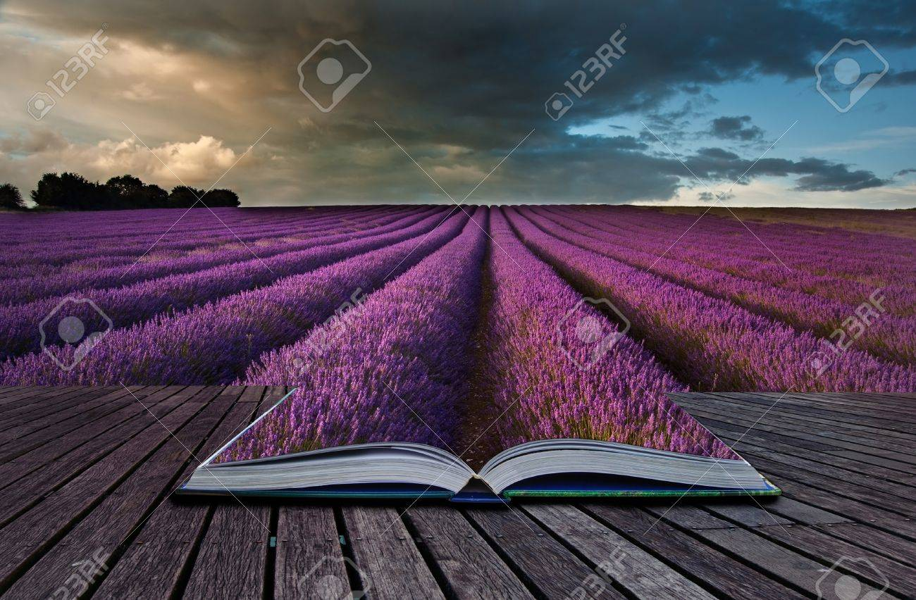 Creative composite image of Summer lavender landscape in pages of magic book Stock Photo - 15521482