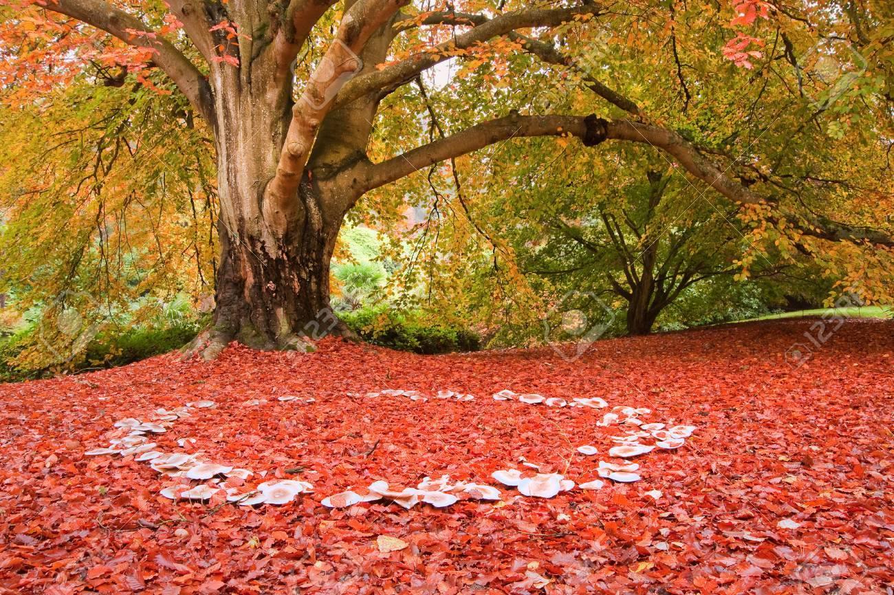 16331466-beautiful-image-of-autumn-fall-