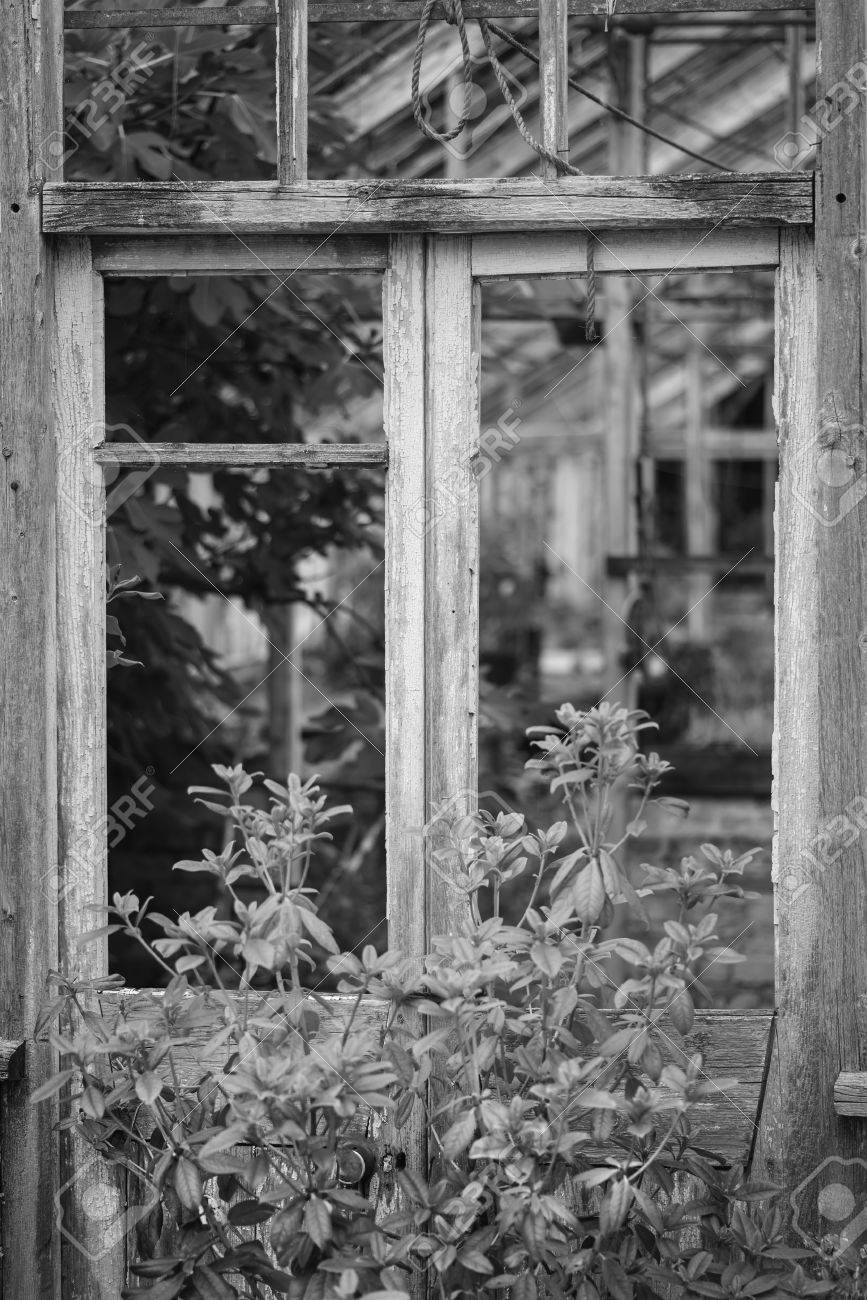 Beautiful old victorian era greenhouse left ro ruin in old english garden in black and white