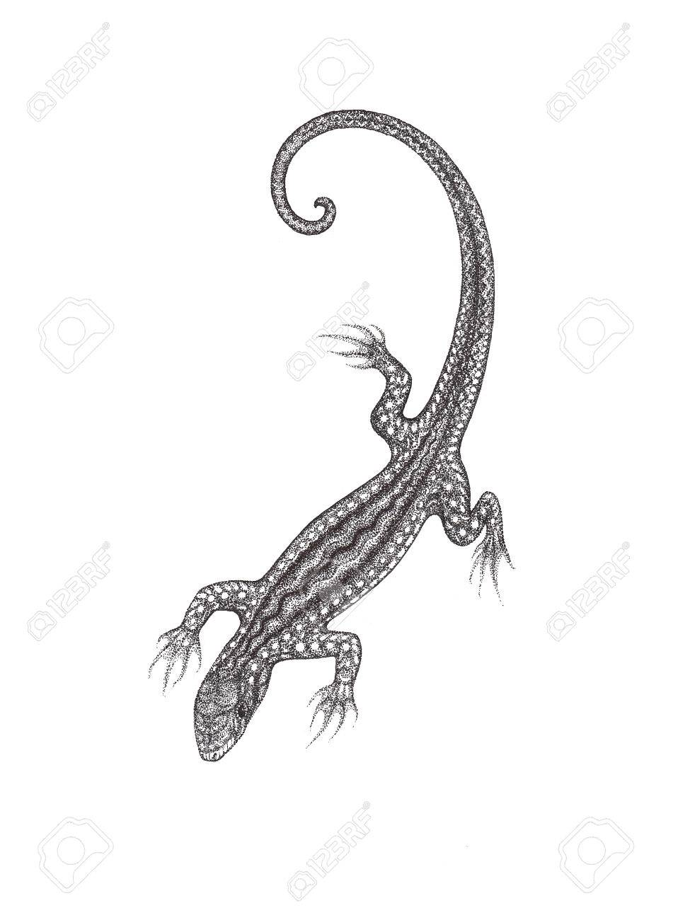 The Drawn Lizard On A White Background In The Style Of Pointillism ... for House Lizard Drawing  67qdu