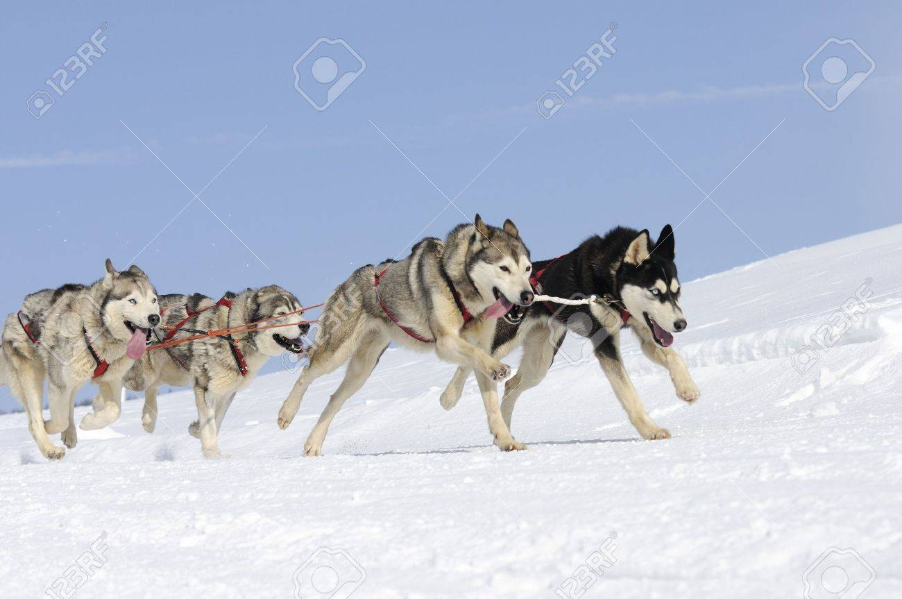Sportive dogs in the mountain Stock Photo - 9246842