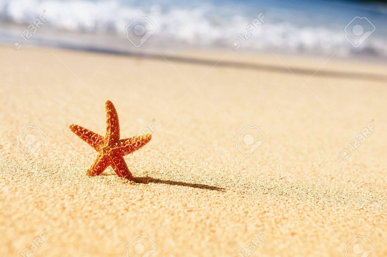 Summer vacations - starfish on sunset sea sand beach Stock Photo - 14368146