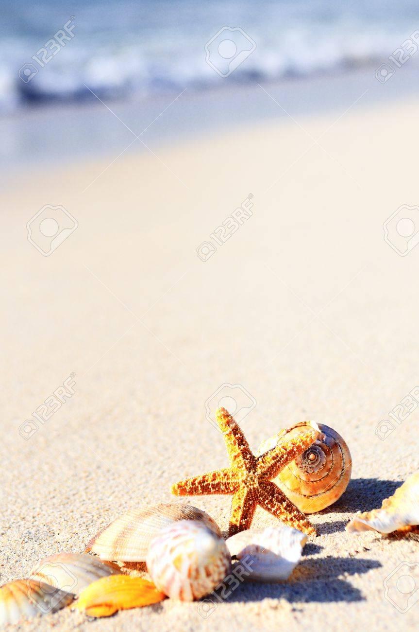 Summer vacations - starfish on sunset sea sand beach Stock Photo - 16424293