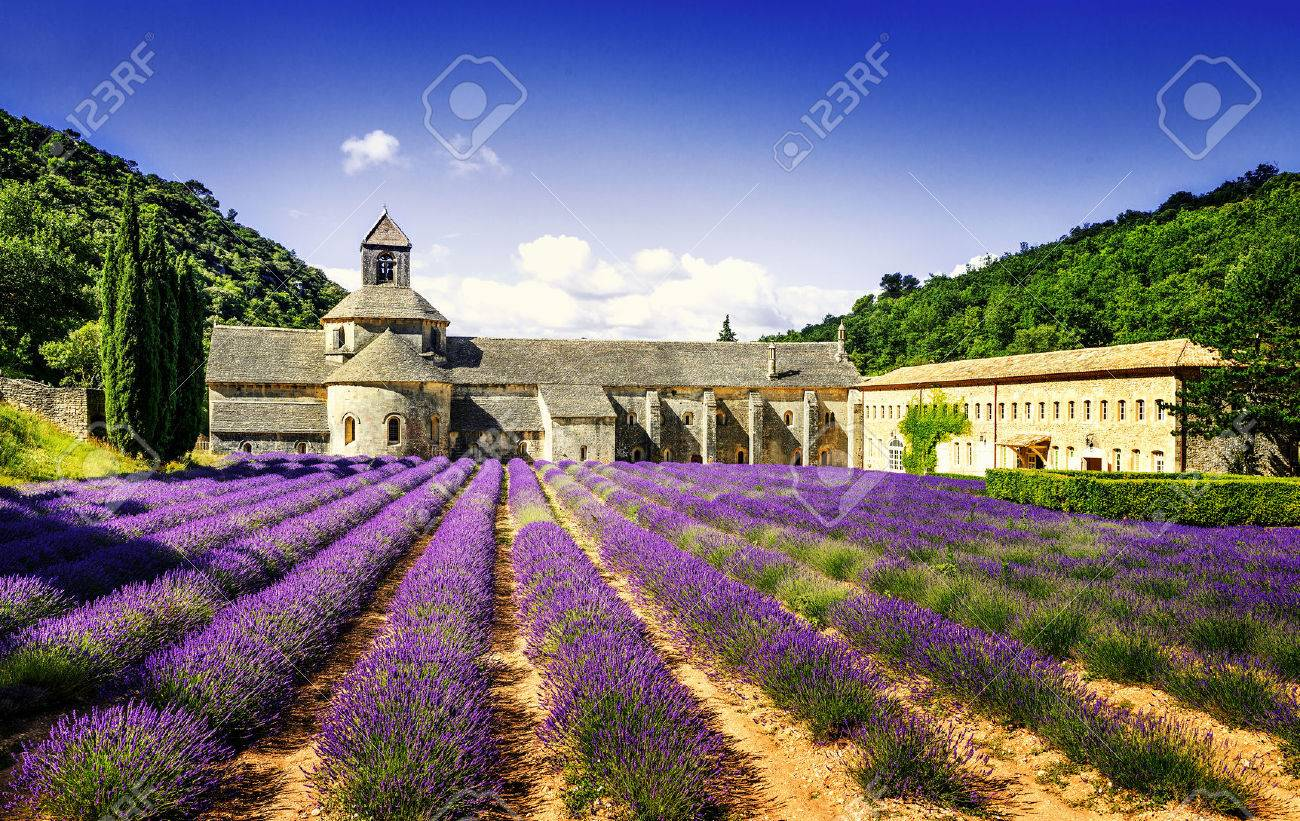 Abbey of Senanque and blooming rows lavender flowers. Gordes, Vaucluse, Provence, France. - 39268999