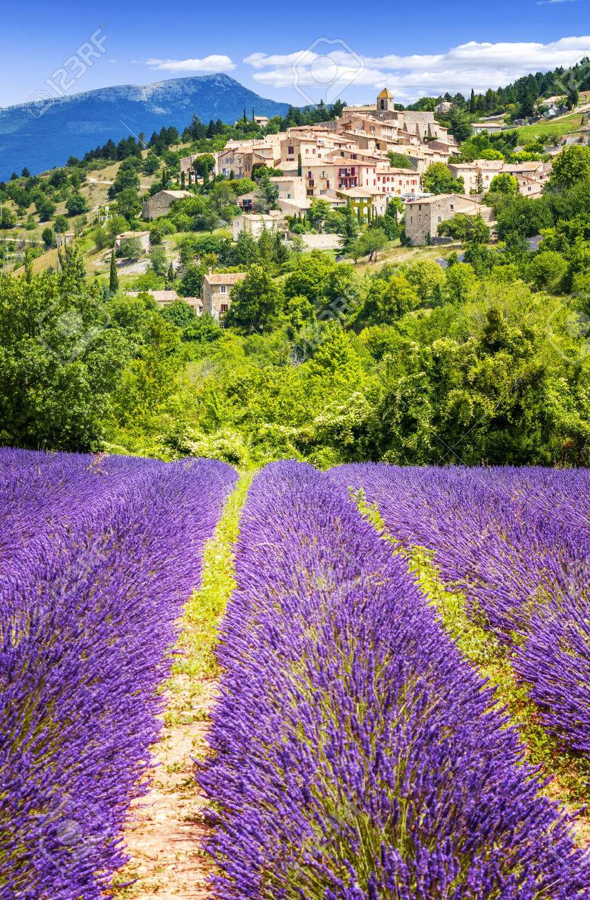 Aurel little village in south of france with a lavender field in front of it - 40827473