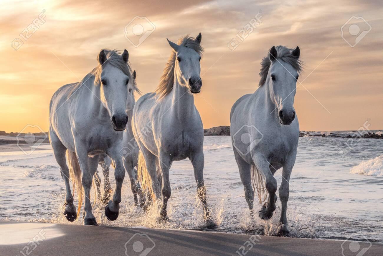 White horse | 867x1300