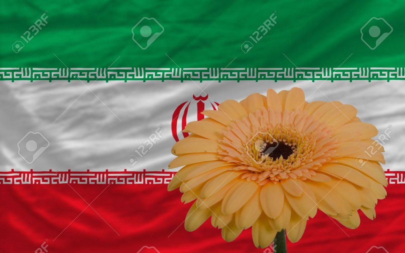 Gerbera daisy flower and national flag of iran as concept and gerbera daisy flower and national flag of iran as concept and symbol of love beauty buycottarizona Choice Image