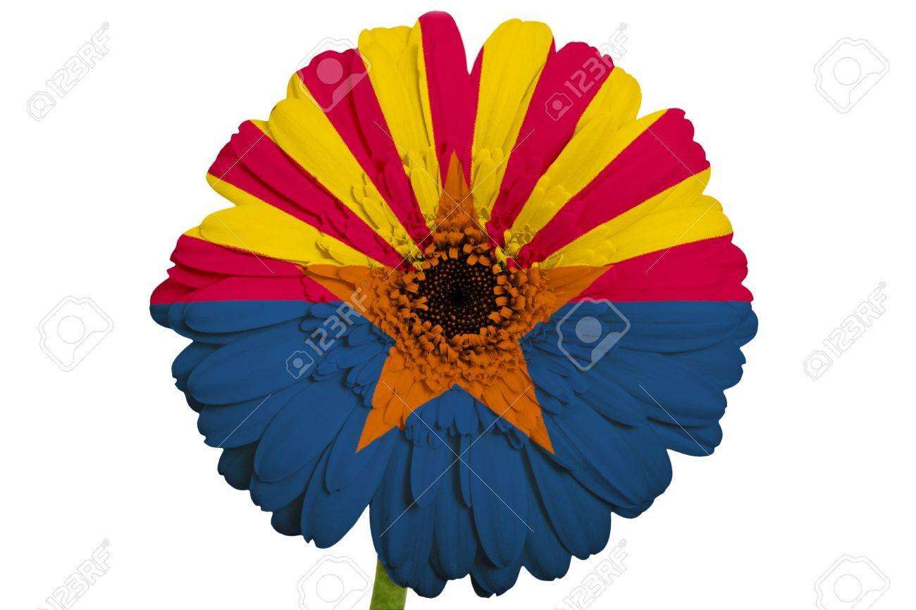 Gerbera Daisy Flower In Colors Flag Of Us State Of Arizona On