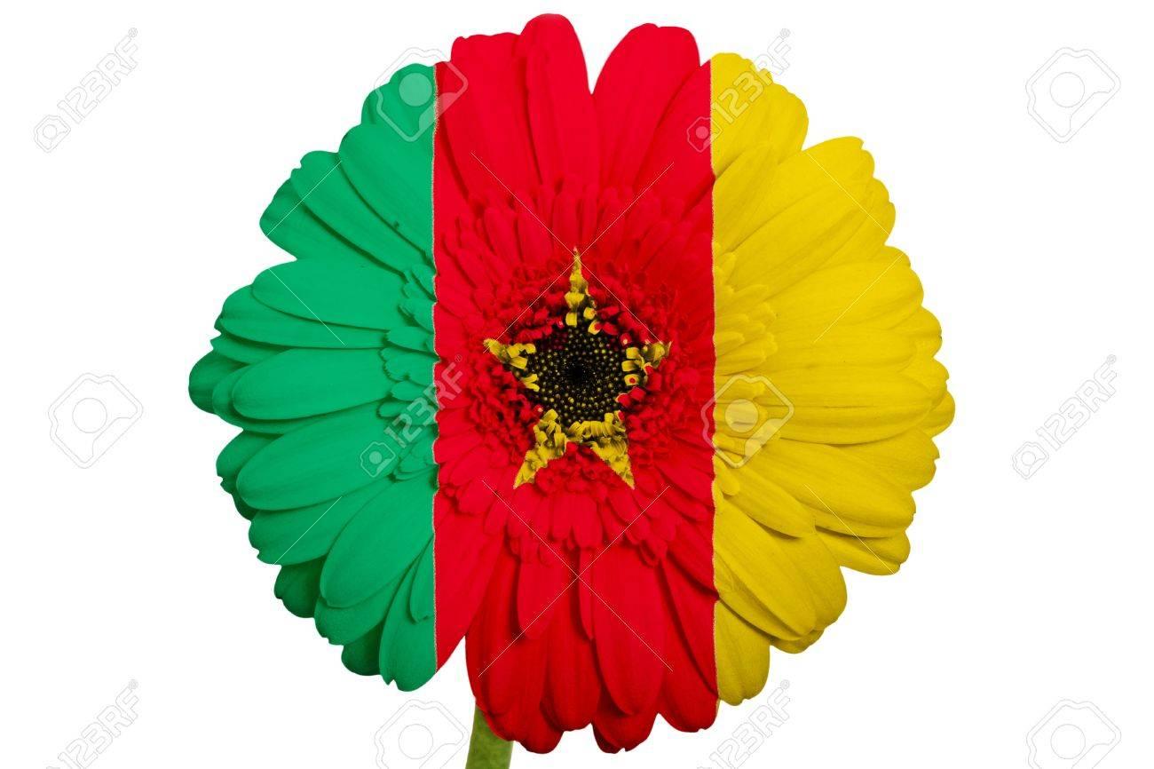 gerbera fleur aux couleurs du drapeau national du cameroun sur