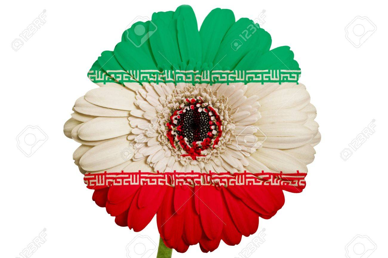 Gerbera daisy flower in colors national flag of iran on white gerbera daisy flower in colors national flag of iran on white background as concept and symbol buycottarizona Choice Image