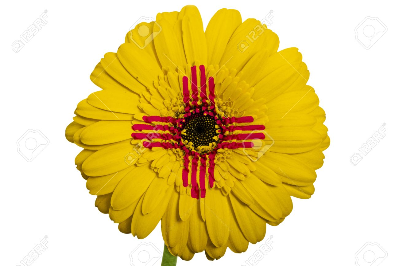 Gerbera daisy flower in colors flag of us state of new mexico gerbera daisy flower in colors flag of us state of new mexico on white background as buycottarizona