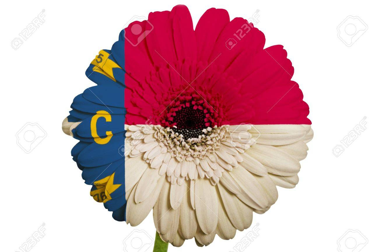 Gerbera daisy flower in colors flag of us state of north carolina gerbera daisy flower in colors flag of us state of north carolina on white background as buycottarizona