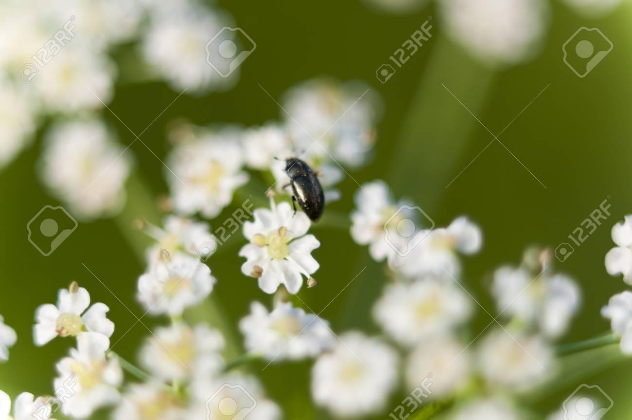 Flores Silvestres Blancas Pequenas Fotos Retratos Imagenes Y