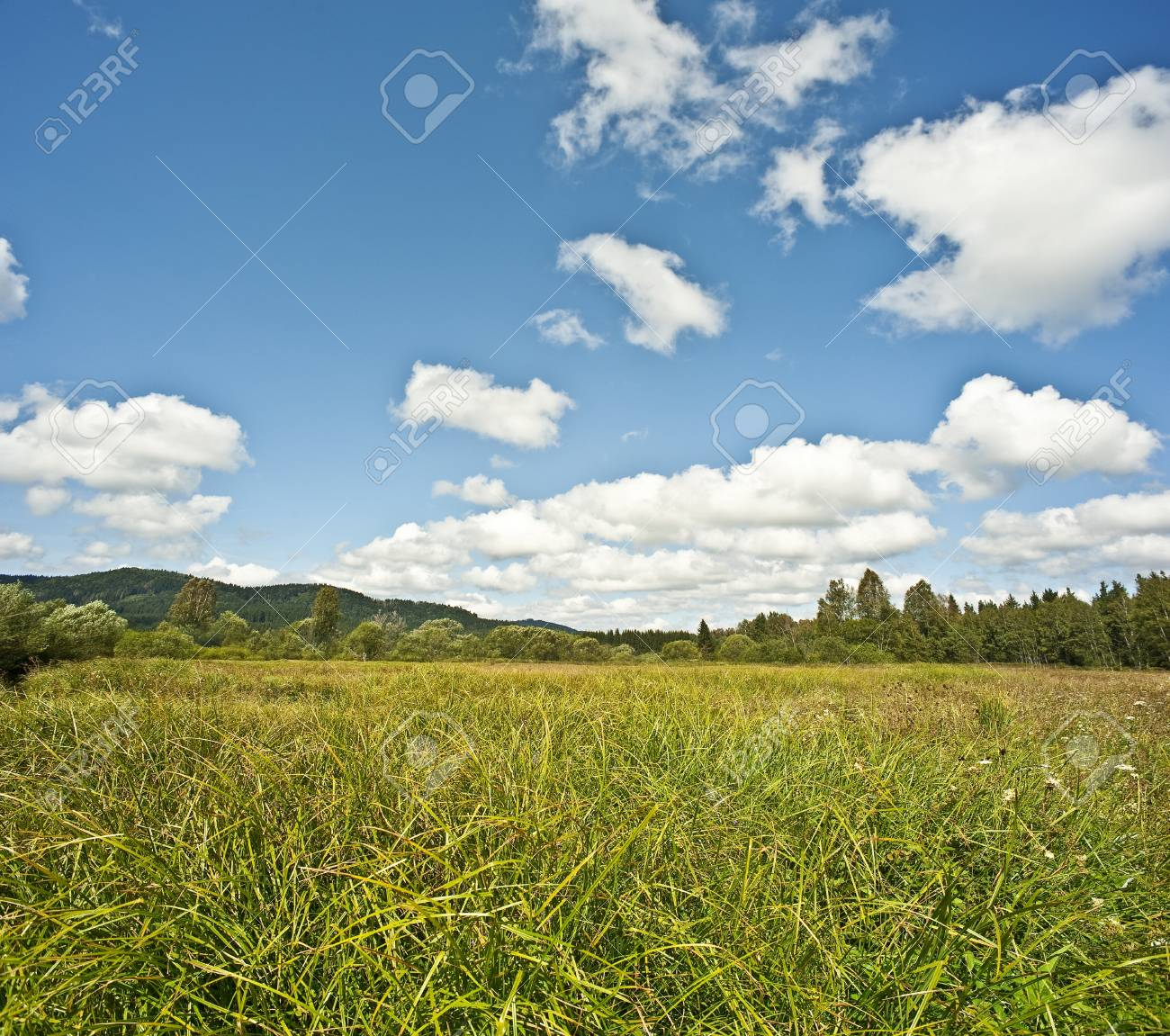 summer meadow and forest Stock Photo - 14961244