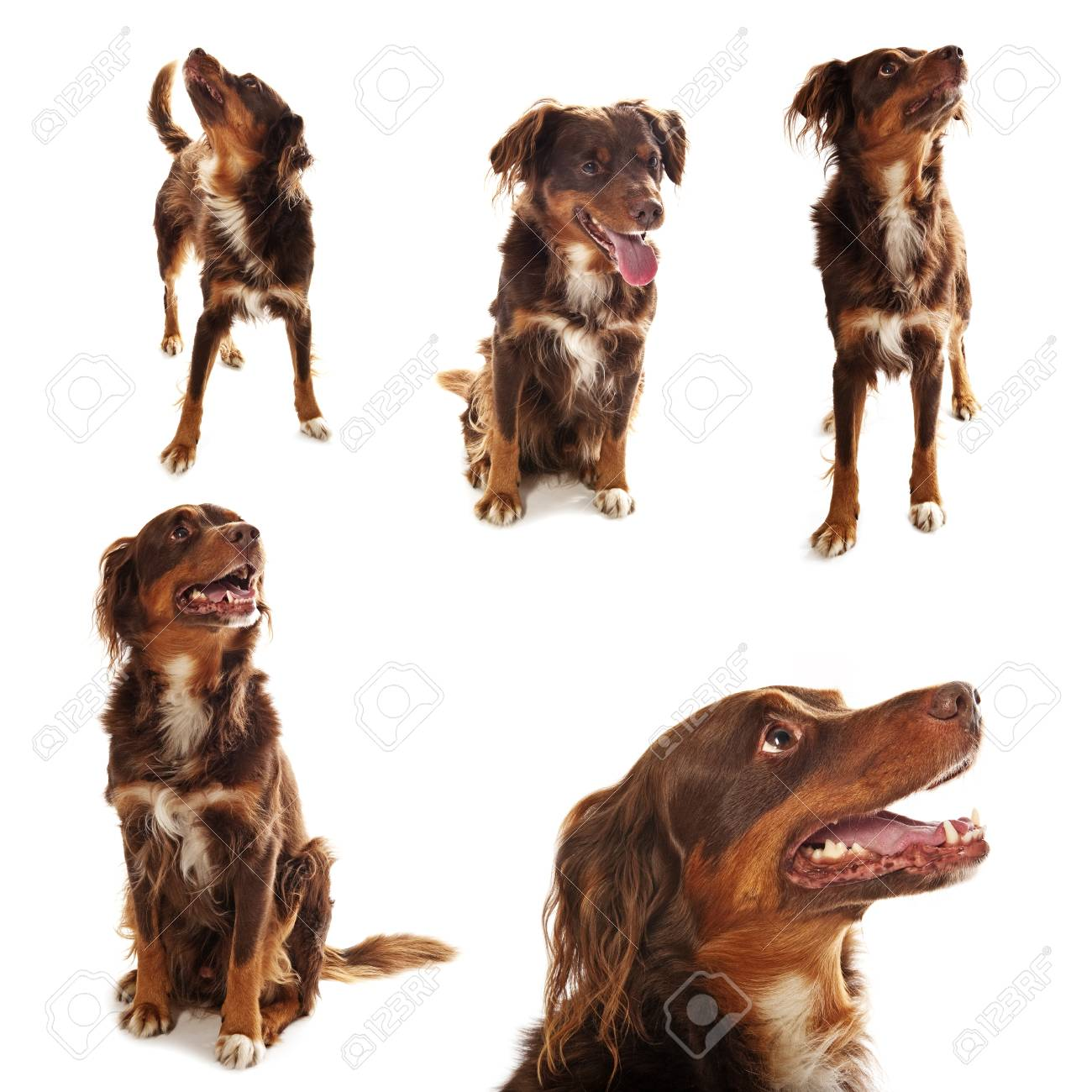 dog collection Stock Photo - 17457126