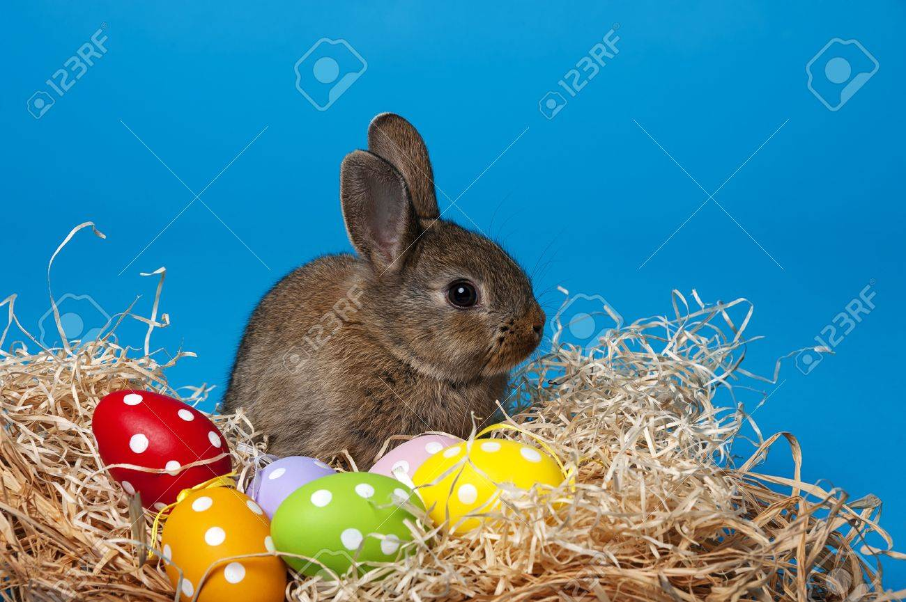 little cute baby rabbit and painted easter eggs stock photo