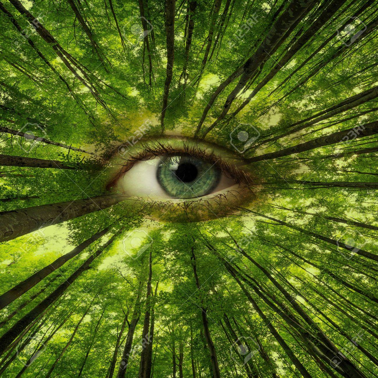 eye of forest - ecology concept - 20409017