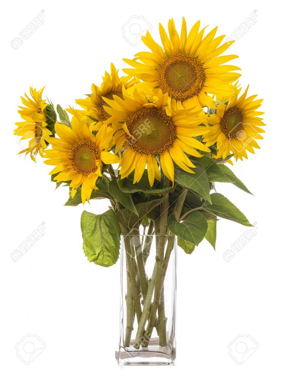 A big bunch of sunflowers in a vase stock photo picture and a big bunch of sunflowers in a vase stock photo 21634812 reviewsmspy