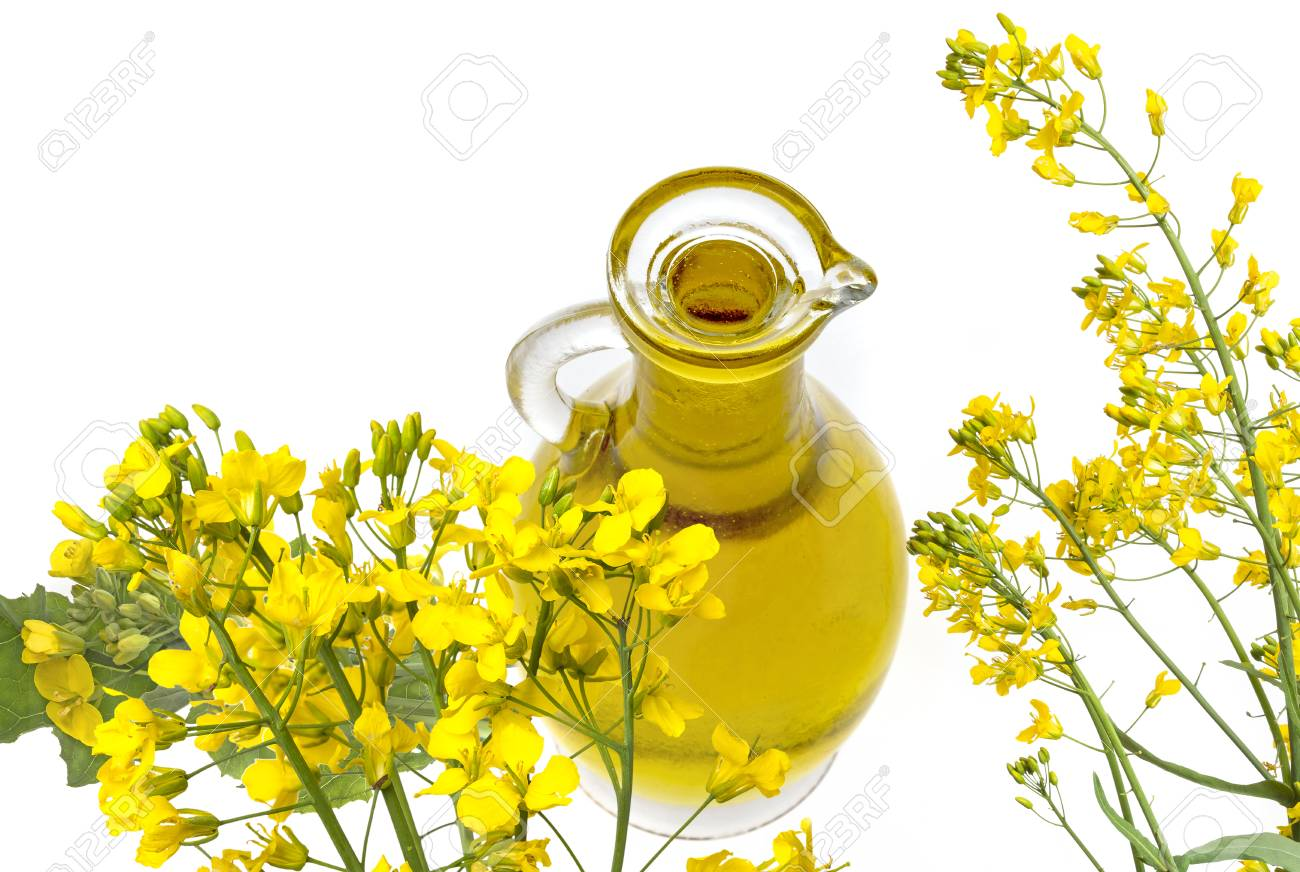 Rapeseed Oil (colza) Brassica Napus Flowers Isolated On White Stock Photo,  Picture And Royalty Free Image. Image 102064462.