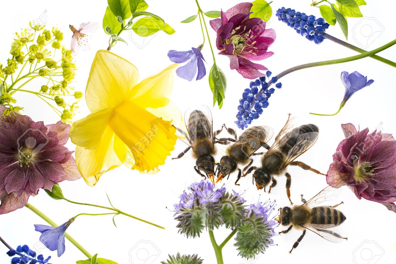 Spring Flowers And Bees Drinking Nectar Stock Photo Picture And